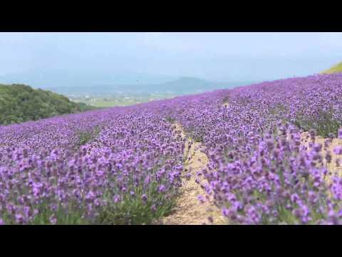 『北海道樺戸郡浦臼町』の動画を楽しもう!