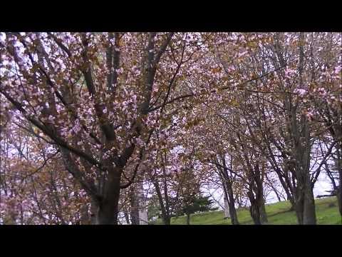 『北海道芦別市』の動画を楽しもう!