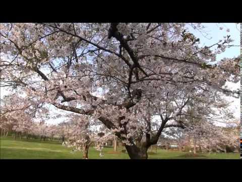 『北海道二海郡八雲町』の動画を楽しもう!