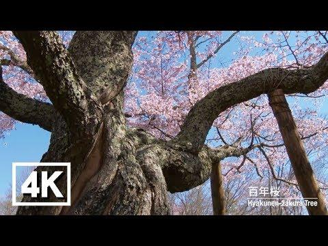 『北海道浦河郡浦河町』の動画を楽しもう!