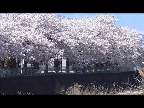 『群馬県前橋市』の動画を楽しもう!