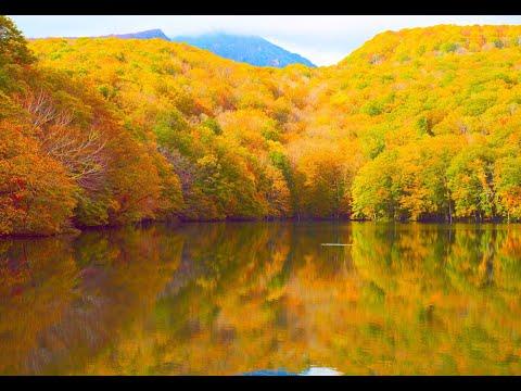 『青森県青森市』の動画を楽しもう!