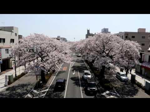 『茨城県日立市』の動画を楽しもう!