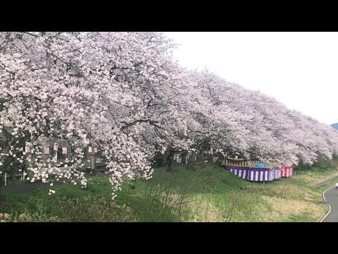 『福井県福井市』の動画を楽しもう!