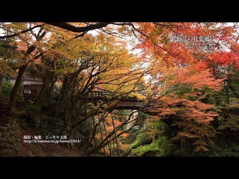 『石川県加賀市』の動画を楽しもう!