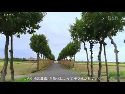 『新潟県新潟市秋葉区』の動画を楽しもう!