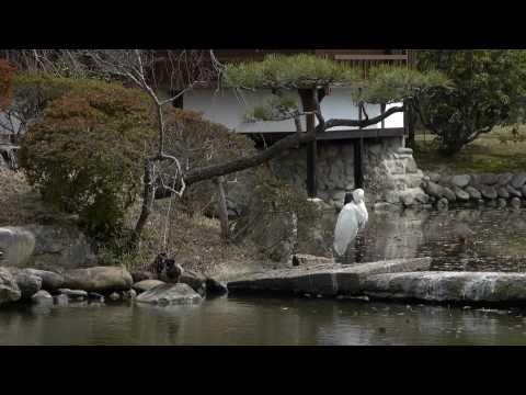 『岡山県津山市』の動画を楽しもう!