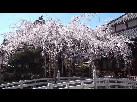 『埼玉県さいたま市浦和区』の動画を楽しもう!