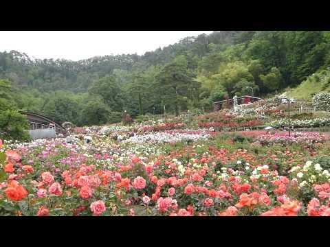 『山形県村山市』の動画を楽しもう!