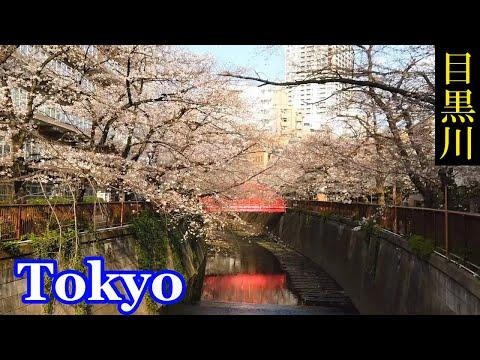 『東京都目黒区』の動画を楽しもう!