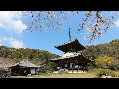 『和歌山県岩出市』の動画を楽しもう!