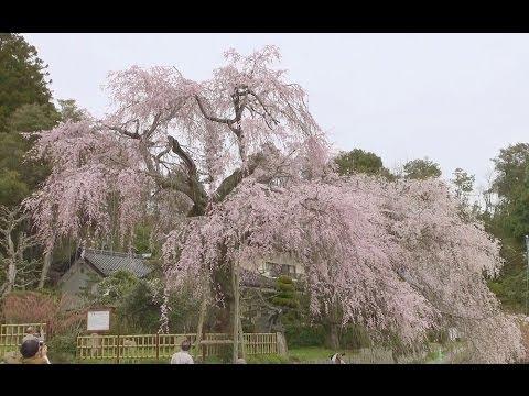 『広島県広島市佐伯区』の動画を楽しもう!
