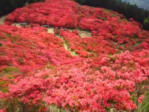 『奈良県御所市』の動画を楽しもう!