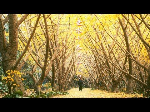 『鹿児島県垂水市』の動画を楽しもう!