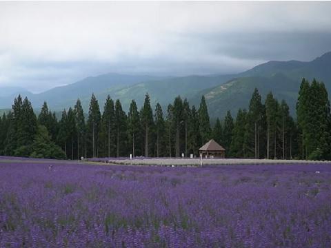 『秋田県仙北郡美郷町』の動画を楽しもう!