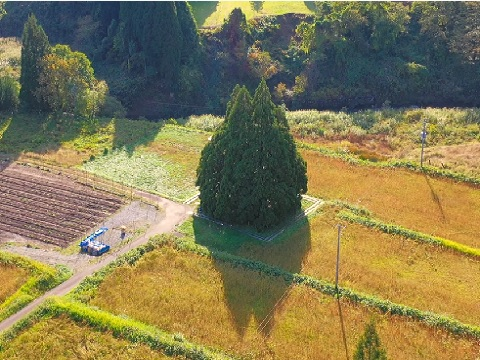 『山形県最上郡鮭川村』の動画を楽しもう!
