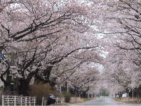 『福島県双葉郡富岡町』の動画を楽しもう!