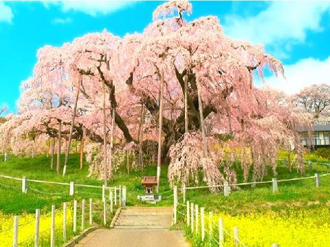 『福島県田村郡三春町』の動画を楽しもう!