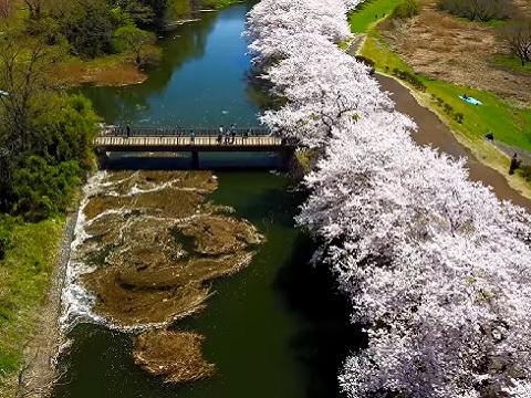 『茨城県つくばみらい市』の動画を楽しもう!