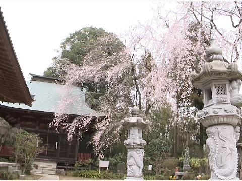 『茨城県東茨城郡城里町』の動画を楽しもう!